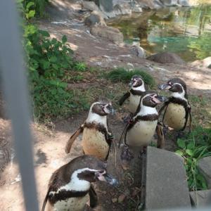 天王寺動物園/鳥楽園