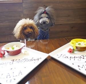 カフェで♪・神奈川県「ララ6才ミク3才お誕生日旅行」⑪