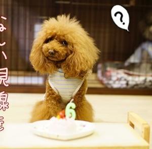 ケーキでお祝い♪