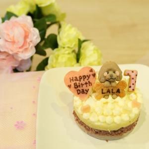 ララお誕生日ケーキ♪