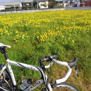 久しぶりのサイクリング&お片付けスタート