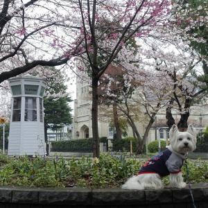 みんなでお花を見に行こう 元町公園&丘公園