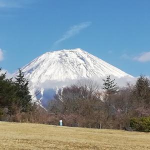 富士山麓で競技会と田子の浦で生しらす丼