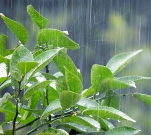 梅雨ってなんで「梅」と「雨」?
