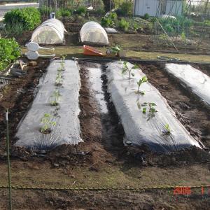 なすとトマトの苗を植えました^^