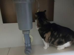 キッチン水栓の水漏れ点検をしよう