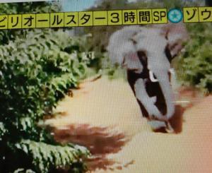 この象の行く末に心を痛める。