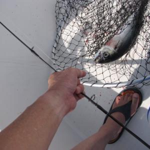 遊漁船の釣り