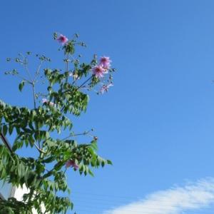 青空に映える花✨