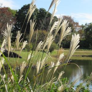 紅葉の昭和記念公園へ🍀