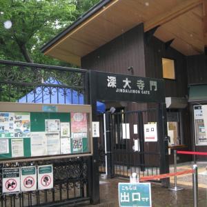 雨のドライブで深大寺へ行きました④