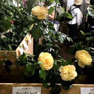 京成バラ園芸の2019年発売の薔薇の販売始まりました