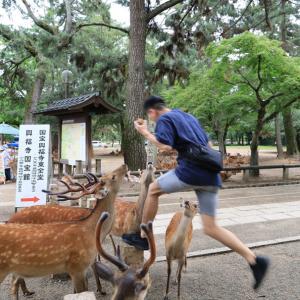 奈良県立美術館記事の公開のお知らせ と 奈良県庁屋上広場