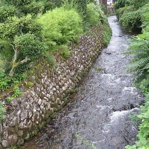 大蓮寺川「護岸の除草」80%完了。