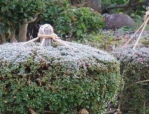 当地、「今冬初氷と強い降霜」。