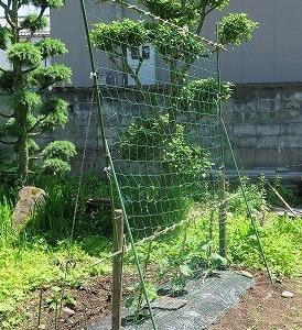 家庭菜園手入れ「夏野菜の手」つくり完了。