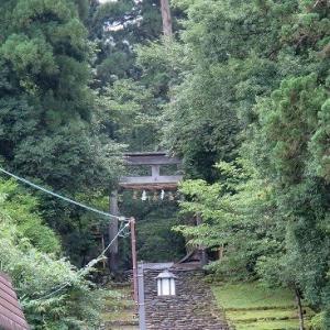 苔の平泉寺、門前「朝市」やっています。