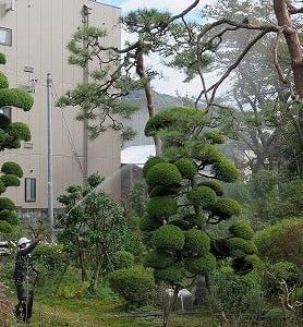 庭木剪定の仕上げ「消毒」実施。
