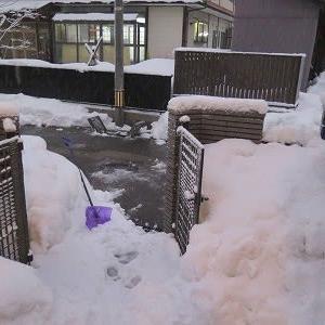 今朝の「新雪15cm」予報より少なく安堵。