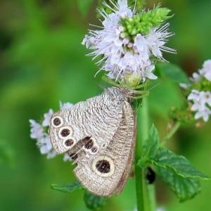 こんな「美しい蝶」も、そして「朝顔ディ」。