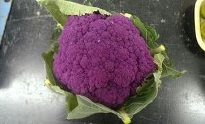そるべじ通信 ~紫色が凄いです☆~