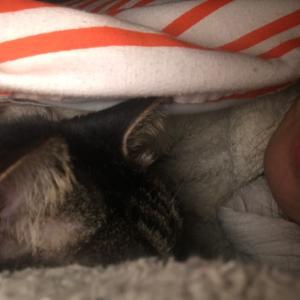 猫と一緒に寝ると頭痛がする話
