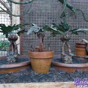 【隠れスポット】スプラウト先生の温室(Greenhouse)にあるマンドレイク(Mandrakes)USJハリーポッター エリア