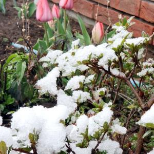 春と冬を楽しめました