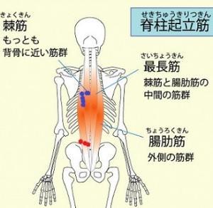 閉経後の骨