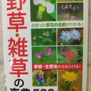 野草・雑草の事典532種