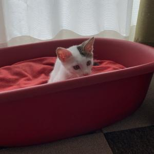 えいと、みんちゃんのベッドにて!