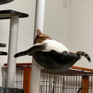 ネコがお腹の上にいるから、動けない!