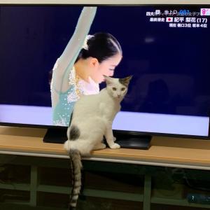 えいと、紀平梨花ちゃんを応援?