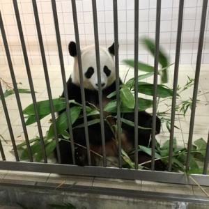 パンダラブツアーの感想。パンダに最接近しておやつをあげられる!予約方法も紹介します。