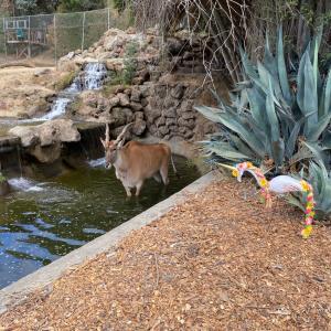 Oakland ZooのBoo Zoo ハロウィンイベント
