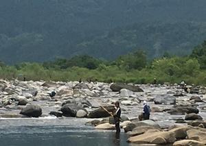 2019年6/22(土) 23(日) 鮎釣り 九頭竜川大野市漁協管区