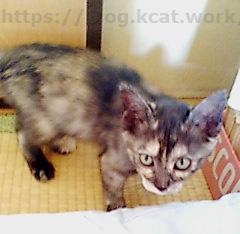 【チョビ子猫時代のブログ記事と写真を発掘】