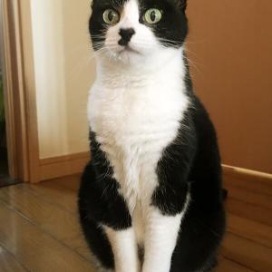 【猫たちの近況報告~ようやく通常モードへ】