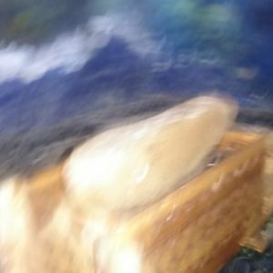 ロックダウン中の食生活と豆腐造り