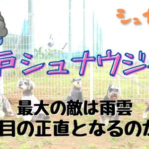 【VLOG】松戸シュナウジャー