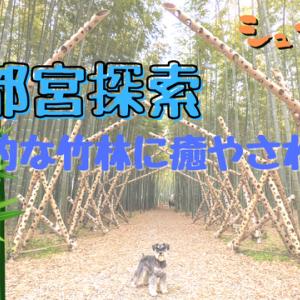 【VLOG】宇都宮探索 ロマンチック村と若山農場