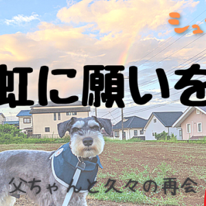 【VLOG】虹に願いを