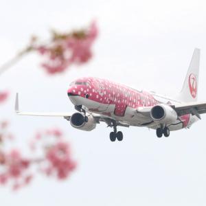 桜フライト