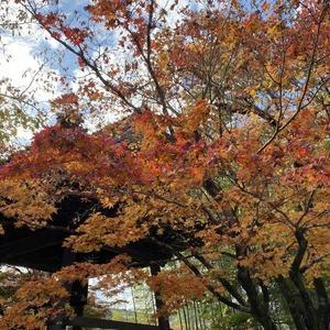gotoトラベル第4弾 修善寺のワンコ宿に行ってきました。その1