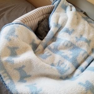 毛布、はじめました