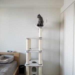 新しいキャットタワー到着!