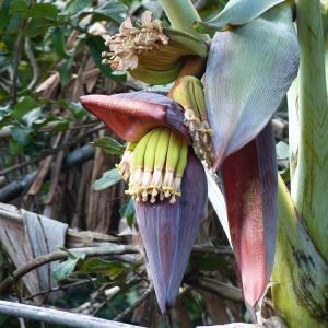 そんな、バナナ