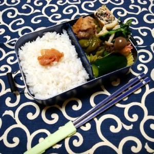 煮込み鶏/お弁当