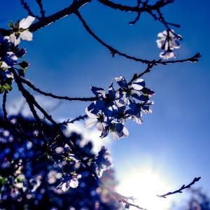 天国に咲く花。
