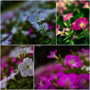 約束の花。